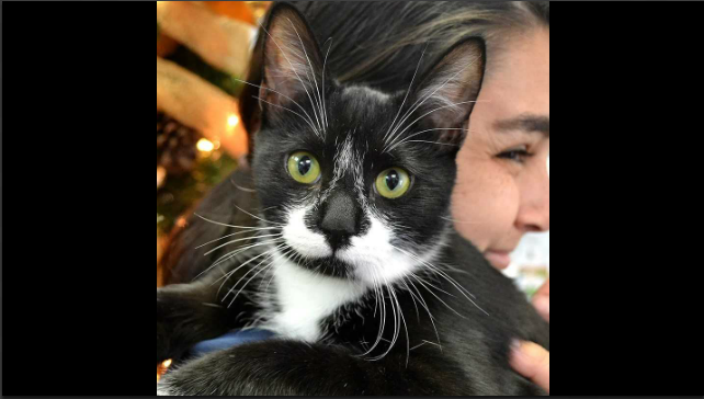 DSC KFMBFM San Diego Radio Kfmbfmcom - 26 hilarious cat snapchats that need to be treasured forever